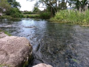 この水のきれいさ。都会なら有料級な勢い