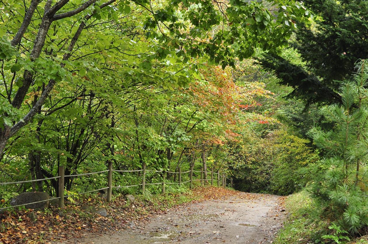 特にこういう山道はドッキドキの刺激あり。