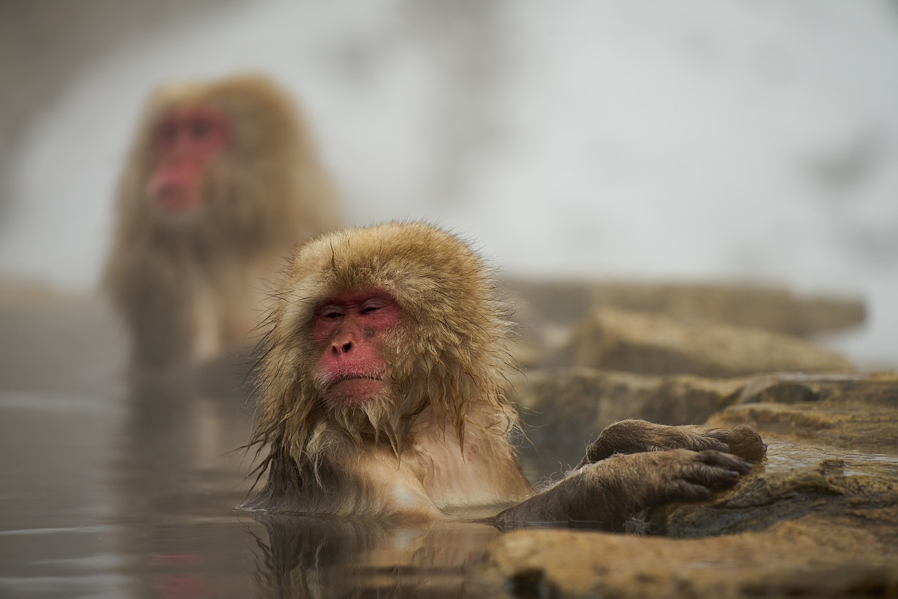 こういう観光スポットもあるが、サルより外人が多い