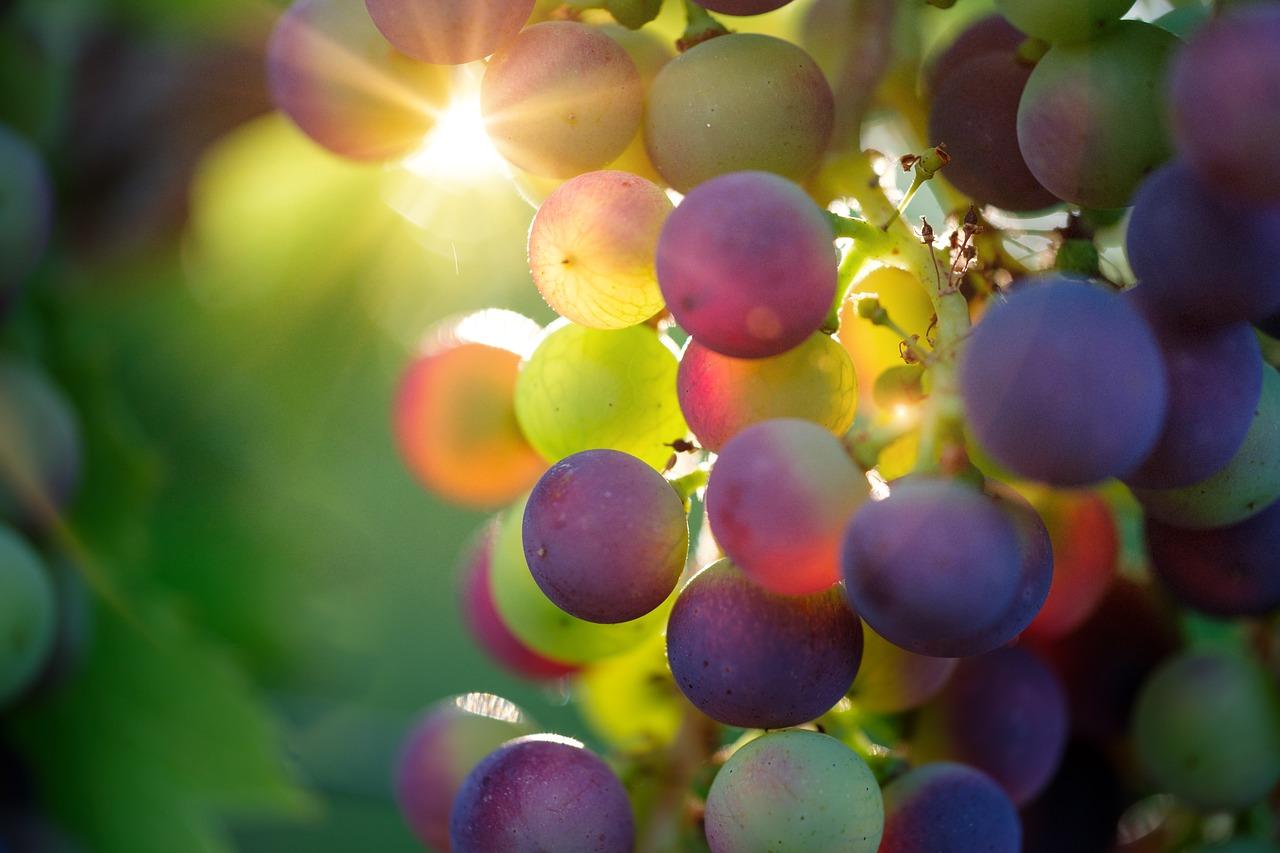 葡萄ってそんなに食わないけどたまに食べると超うまい
