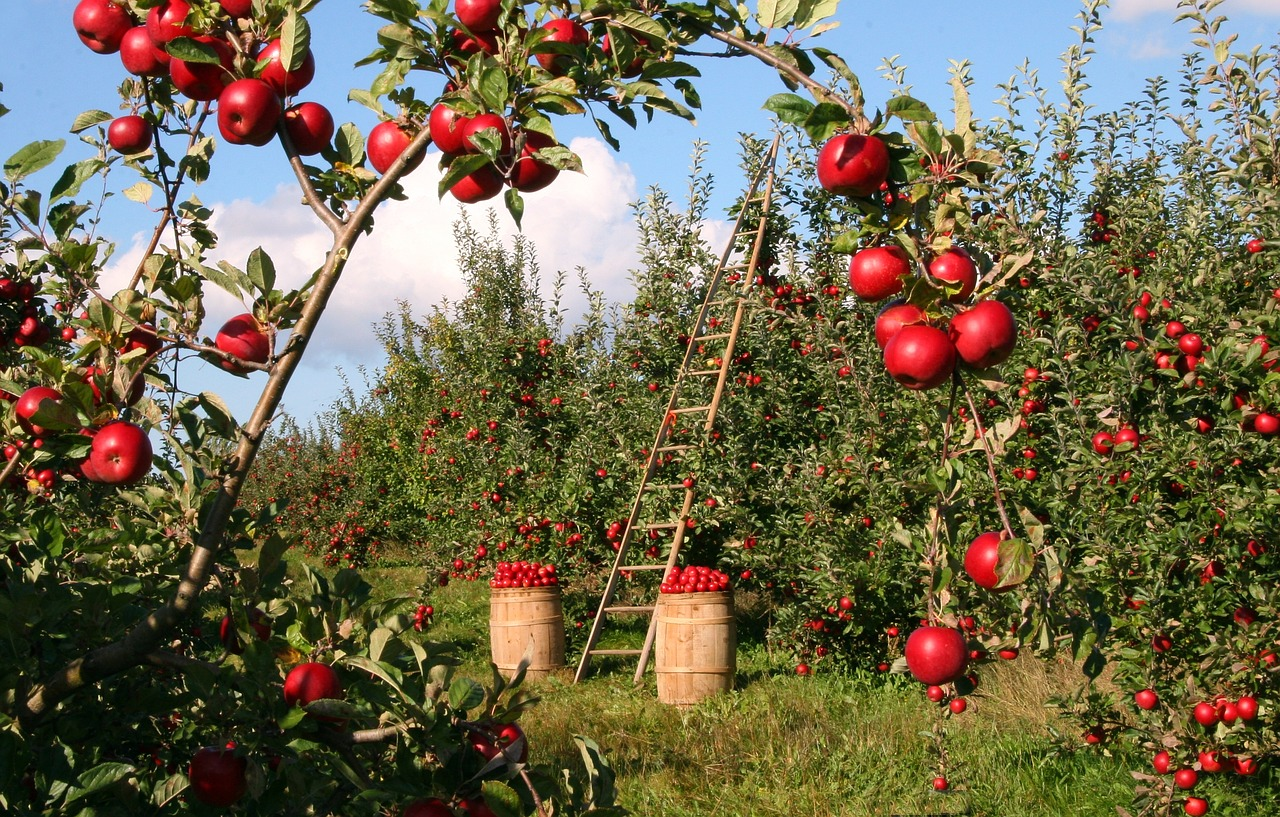 秋はどこに行っても長野ではりんごが旨い