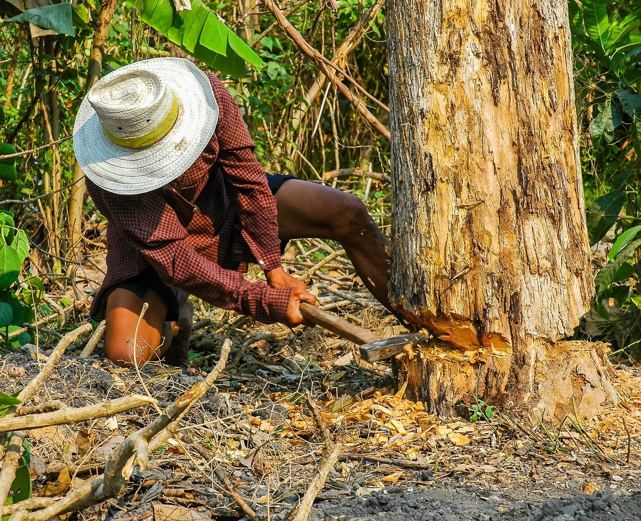 林業はマジで命がけ。体力ないと死にます