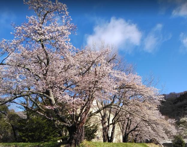 某桜の名所で撮影。