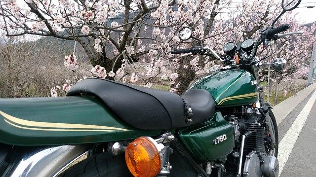 花のすぐ横までバイクを持ていけるのはお花見会場では無理です。