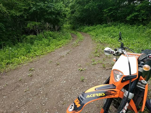 コレぐらいの林道が気楽で素敵だが行き止まりは当然ある