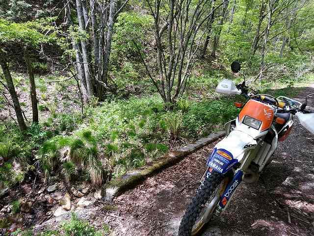 ほんとに林道で2stバイクと出会わなくなりました。DT200WRも貴重ですねえ。