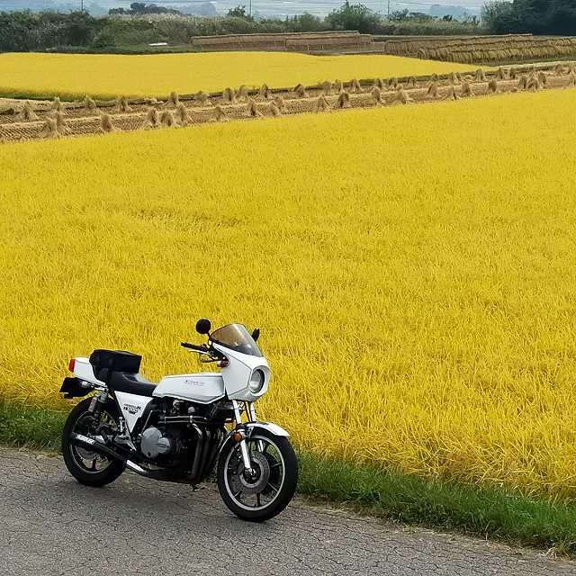 Z1-R。今年の稲は豊作なんじゃろうか?