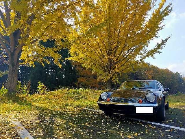 ロータスヨーロッパ。どうだい?この紅葉。メジャーな観光地じゃないのです。