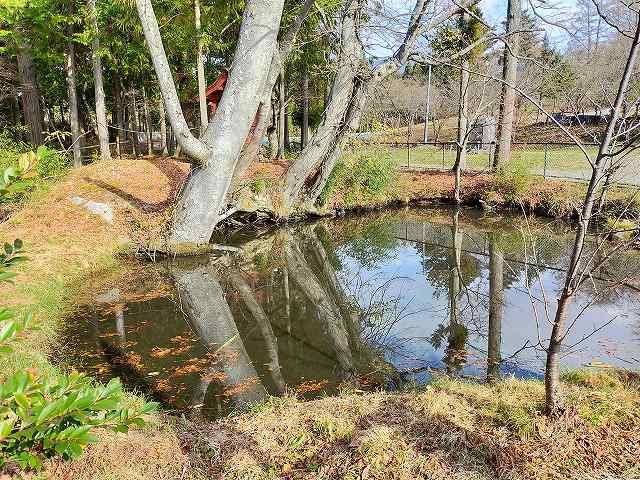 池だねえ、池ですなぁ。