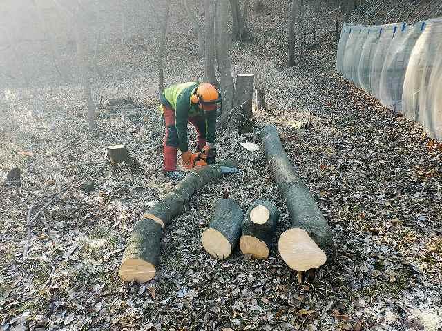 じゃんじゃんテンポよく薪のサイズに切っていくのがプロ。