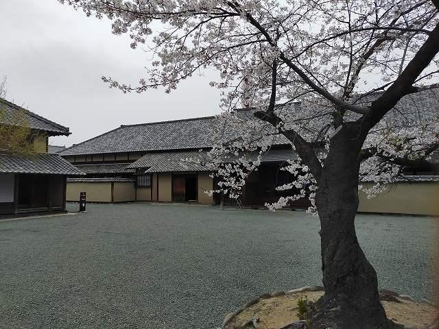 古い建物と桜は絵になりますな。