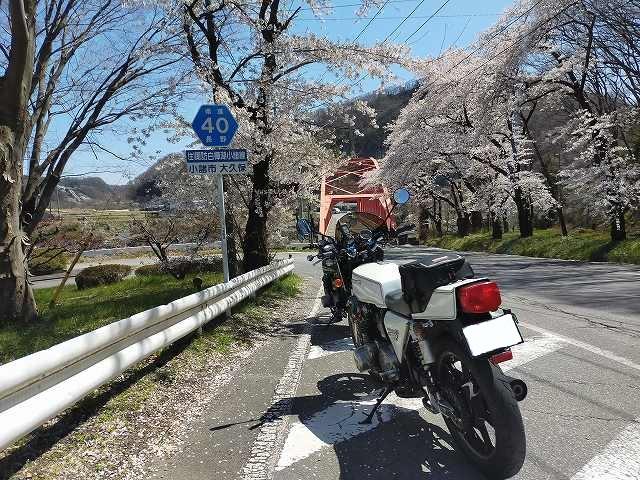 名もない陸橋の手前の桜が満開。