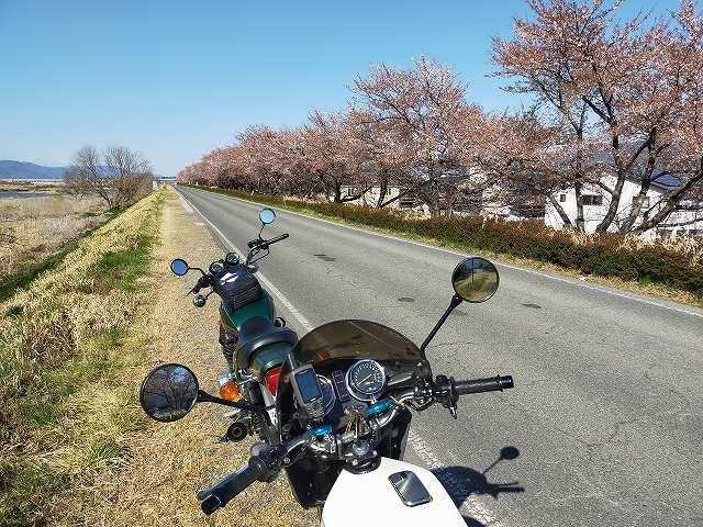 開花宣言から2週間。長野市の桜はだいぶ散っています。