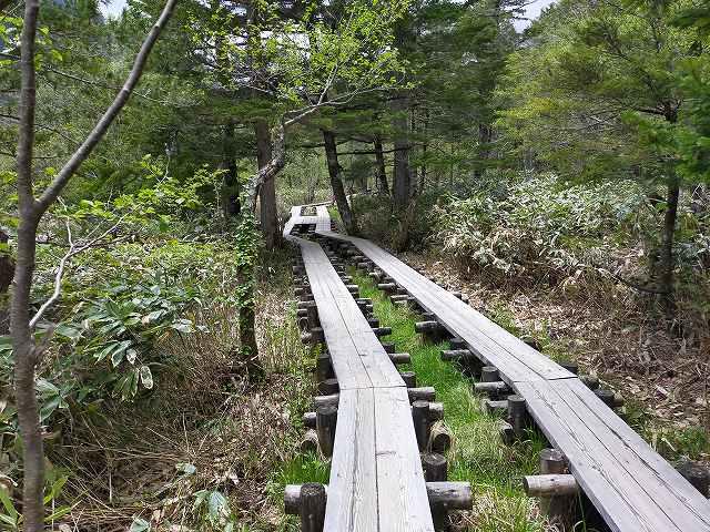 しっかりした木道は戸隠とかと違って腐ってない。