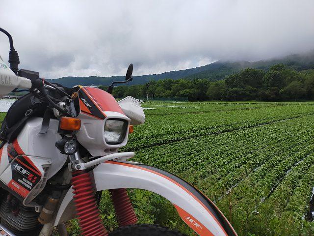 セロー225W。高原レタスの畑が広がります。