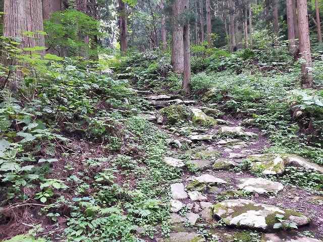 林道じゃないぜ、神社の参道です。