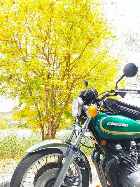 Z750D1。黄色の紅葉はちょっと早い。