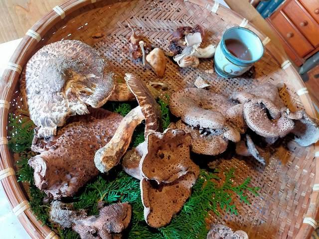 秋の「かたつむり。」のテーブルの上の光景